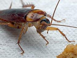 Как можно вывести тараканов?